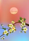 Sakura Sera nella ciliegia e negli uccelli di fioritura del giardino Immagini Stock Libere da Diritti