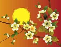 Sakura Sera nella ciliegia e negli uccelli di fioritura del giardino Fotografie Stock Libere da Diritti