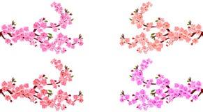 Sakura Set E r Na biały tle ilustracja ilustracja wektor