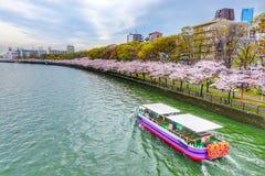 Sakura sezon i Zwiedzająca wycieczka turysyczna przy Osaka Japonia fotografia stock