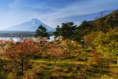 Sakura at Shoji lake with Mt. Fuji. Spring sakura tree or cherry blosson garden near Shoji lake against Mt. Fujisan or mountain fuji with blue sky,Yamanashi Stock Photos