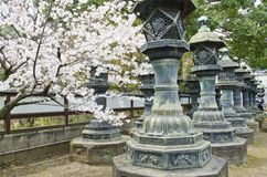 Sakura in Shrine Stock Photography