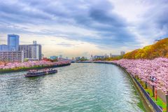Sakura Sightseeing Tour på April på Osaka Japan royaltyfri fotografi
