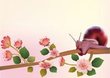 Sakura, snaill, sorgente, cartolina. Fotografia Stock