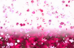 Sakura Snowfall Petals Abstract Background Stock Photography
