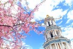 Sakura som blommar i Kiev Pechersk Lavra Fotografering för Bildbyråer