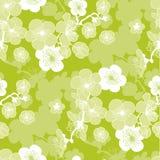 Sakura spring blooming seamless pattern. Stock Photos