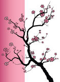 Sakura spring blossoms Royalty Free Stock Image