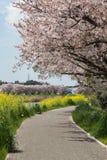 Sakura strona rzeka i przejście Zdjęcia Royalty Free
