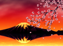 Sakura at Sunset Time Stock Images
