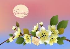 Sakura . Tea ceremony. Stock Image