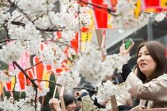 Sakura a Tokyo, Giappone Fotografie Stock Libere da Diritti