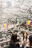 Sakura a Tokyo, Giappone Fotografia Stock Libera da Diritti
