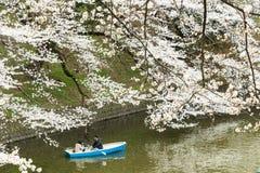 Sakura in Tokyo, Japan Royalty Free Stock Photos