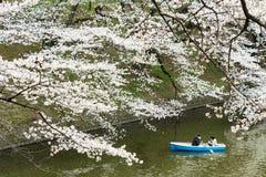 Sakura in Tokyo, Japan Stock Image