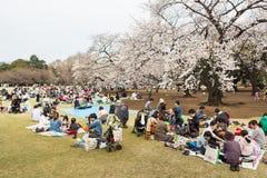 Sakura in Tokyo, Japan Stock Photos