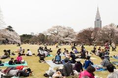 Sakura in Tokyo, Japan. Tokyo, Japan - March 23, 2013: Japanese people is sitting in Shinjukugyoen park seeing Sakura blossom at Shinjuku, Tokyo, Japan royalty free stock images