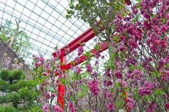 Sakura and Torii gate Stock Image