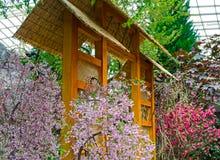 Sakura and Torii gate Royalty Free Stock Photo