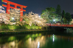 Sakura and torii Stock Photography
