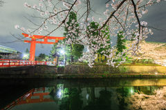 Sakura and torii Stock Photo