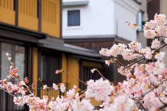Sakura and traditional house in Japan Royalty Free Stock Photo