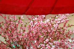 Sakura and Traditional Japanese red umbrella royalty free stock photo
