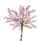 Sakura tree. Illustration of a cherry blossom tree Royalty Free Stock Photo