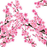 Sakura tree Royalty Free Stock Image
