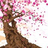 Sakura tree. Blooming in spring Royalty Free Stock Images