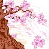 Sakura tree. Blooming in spring Royalty Free Illustration