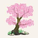 Sakura Tree Stockfotos