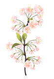 Sakura tree. Flowers. Vector-Illustration Stock Images