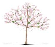Sakura Tree ilustração stock
