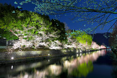Sakura tree and Biwa lake canal Stock Photo