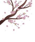 Sakura Tree Royalty Free Stock Photography