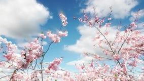 Sakura Tree And Blue Sky stock de ilustración
