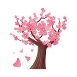 Sakura Tree Cherry Blossom Vettore Fotografia Stock