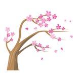 Sakura Tree con i fiori rosa Immagini Stock Libere da Diritti