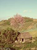 Sakura tree on gabbage field Stock Image