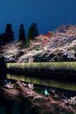 Sakura tree and lake reflection Royalty Free Stock Photography