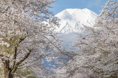Mt. Fuji Stock Photos