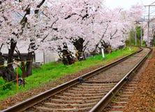 Sakura tree with railroad Stock Image