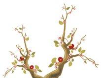 Sakura tree and red fruit Royalty Free Stock Photos