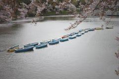 Sakura tree and rowboat. Stock Photos