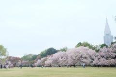 Sakura tree in shinjuku gyoen national garden. Shinjuku Gyoen (新宿御苑) is one ofTokyo´s largest and most popularpark. Located royalty free stock photography