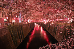 SAKURA TREES NEAR THE RIVER Stock Photography