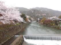 Sakura trees and the river in Arashiyama, Kyoto, Japan stock photo