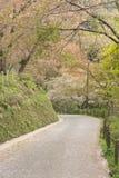 Sakura trees Road Royalty Free Stock Photography