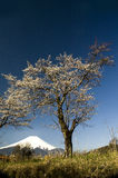 Sakura u. Mt Fuji Lizenzfreie Stockfotografie